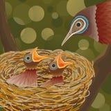 Pássaros e ninho Fotos de Stock