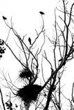 Pássaros e ninhos em uma árvore seca. Outono. Foto de Stock