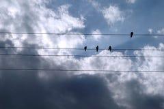 Pássaros e nuvens Fotos de Stock