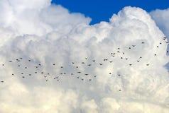 Pássaros e nuvens Foto de Stock