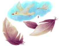 Pássaros e penas Foto de Stock Royalty Free