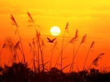 Pássaros e sol Foto de Stock