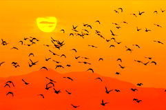 Pássaros e sol Imagens de Stock Royalty Free