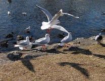 Pássaros e sombras imagem de stock royalty free