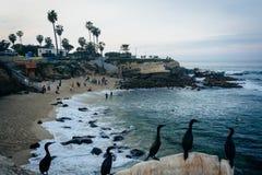 Pássaros e vista de uma praia em La Jolla, Califórnia Imagem de Stock Royalty Free