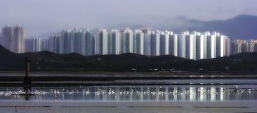 Pássaros, Egrets na água no mar com reflexão da casa fotos de stock royalty free