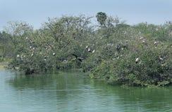 Pássaros em árvores Imagem de Stock