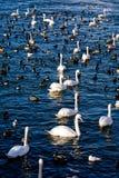 Pássaros em Éstocolmo Fotos de Stock Royalty Free