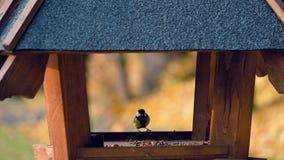 Pássaros em alimentadores no parque vídeos de arquivo