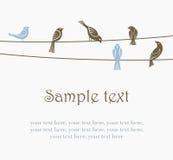 Pássaros em fios Imagem de Stock