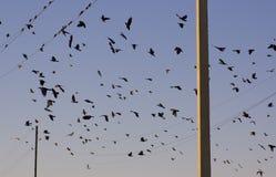 Pássaros em fios Fotografia de Stock