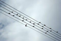 Pássaros em fios fotos de stock royalty free