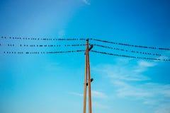 Pássaros em fios foto de stock royalty free