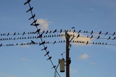 Pássaros em fios de telefone Fotos de Stock