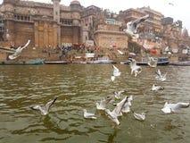 Pássaros em Ganges Fotografia de Stock Royalty Free