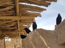 Pássaros em Masada imagem de stock