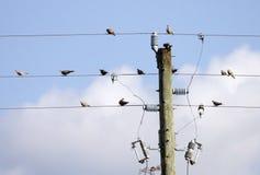 Pássaros em um fio Fotos de Stock