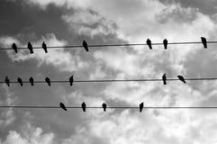 Pássaros em um fio Fotos de Stock Royalty Free