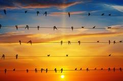 Pássaros em um fundo do nascer do sol Fotos de Stock Royalty Free