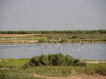 Pássaros em um lago de sal imagens de stock royalty free