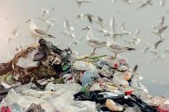 Pássaros em um lixo da operação de descarga Fotos de Stock Royalty Free