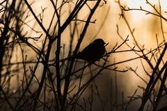 Pássaros em um ramo Foto de Stock Royalty Free