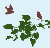 Pássaros em um ramo do Linden Imagens de Stock