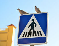 Pássaros em um sinal de estrada Fotografia de Stock Royalty Free