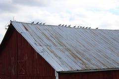 Pássaros em um telhado fotografia de stock
