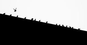Pássaros em um telhado Imagens de Stock Royalty Free