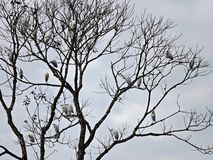 Pássaros em uma árvore e em uma luz - céu azul Imagem de Stock Royalty Free