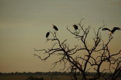 Pássaros em uma árvore na noite Fotografia de Stock Royalty Free