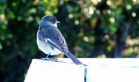 Pássaros em uma conversão de madeira Fotos de Stock