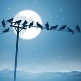 Pássaros em uma linha ilustração stock