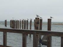 Pássaros em uma linha Foto de Stock Royalty Free