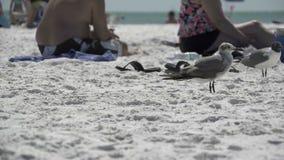 Pássaros em uma praia ocupada (10 de 13) filme