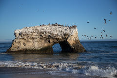 Pássaros em uma rocha Fotos de Stock
