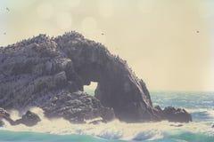 Pássaros em uma rocha na praia. Imagens de Stock Royalty Free