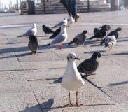Pássaros em Veneza imagens de stock