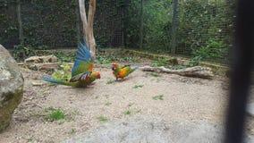 Pássaros em voo Imagens de Stock