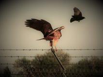 Pássaros em voo imagem de stock royalty free