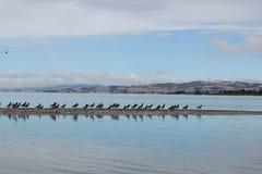 Pássaros emigrantes que descansam como uma linha fotografia de stock royalty free