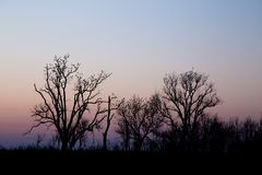 Pássaros empoleirados nas árvores Fotos de Stock