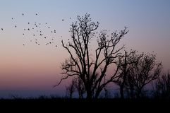 Pássaros empoleirados nas árvores Foto de Stock Royalty Free