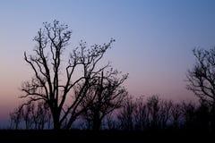 Pássaros empoleirados nas árvores Imagens de Stock