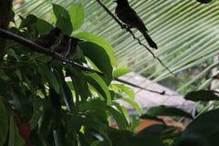 Pássaros encantadores Imagem de Stock