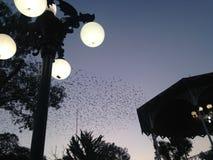 Pássaros entre luzes e sombras Fotografia de Stock