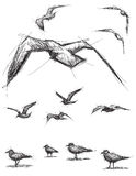 Pássaros esboçado Fotos de Stock Royalty Free