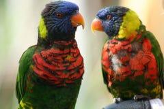 Pássaros exóticos Imagens de Stock