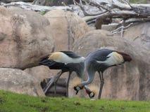 Pássaros exóticos do jardim zoológico Fotografia de Stock